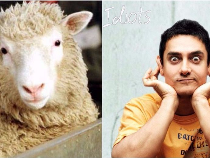 Dolly, sheep, clone, mammal, Rolins institution, rancho, 3idiots, amirkhan