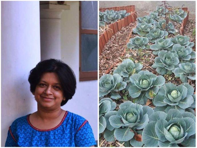 Brown leaf, Aditi Deodhar, Ecology, Environmental forums