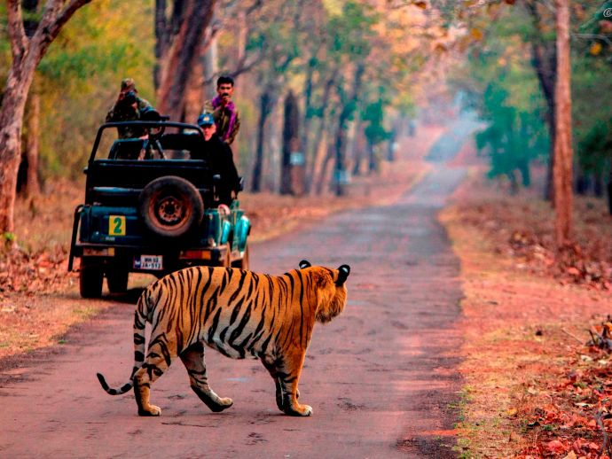 nagpur, Tadoba-Andhari Tiger Reserve, TATR, statutory local advisory committee, LAC, reserve's management, tadoba safari, Canter tourist, safari vehicles, tiger reserve, Conservationist, kolara, navegaon, Prakash Kamde, Yogesh Dudhpachare, field director