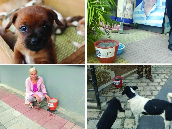 Pune, Animal Lovers, People For Animals (PFA) Pune, bodhisattva, Mojdeh Arab Farashahi, stray dogs, summer, ngo, birds, Water For Animals In Pune, Animal Lovers In Pune, Pune NGO