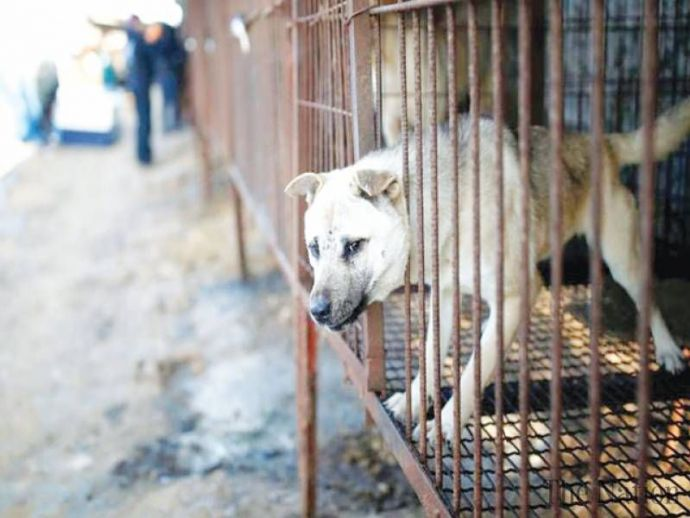 Taiwan, Ban, Consumption, Euthanasia, Asia, Dogs, Cats, Animal Protection Act