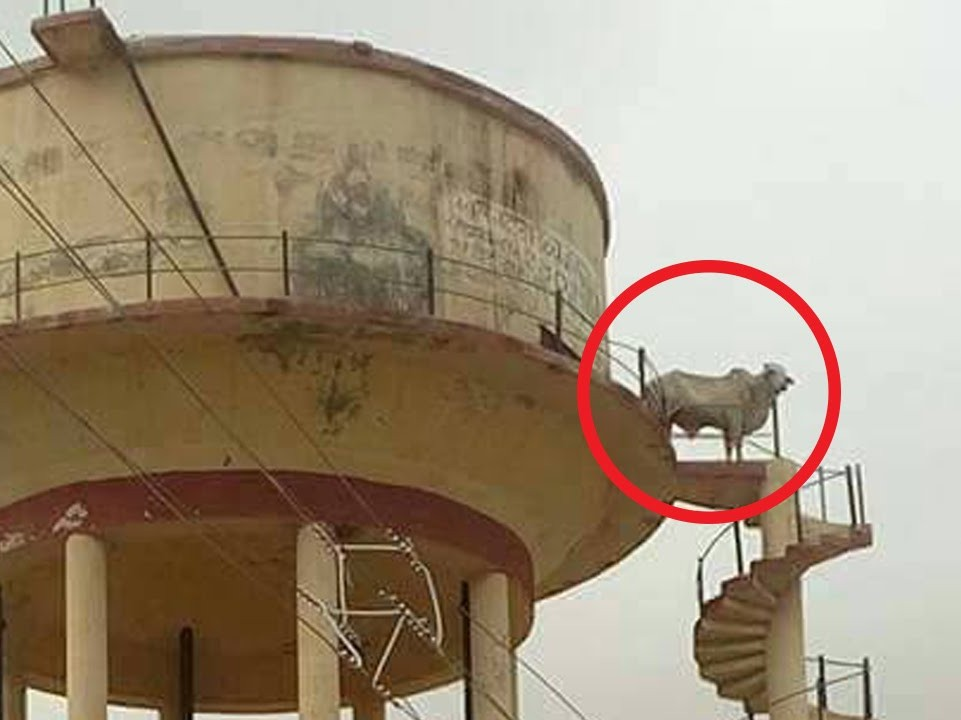 Dharmendra, Sholay, Sholay Stunt by Veeru, Sholay Stunt By Bull, Rajasthan, Rajasthan's Churu, Bull On Water Tank