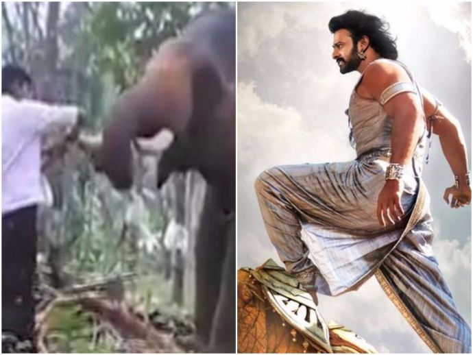 Kerala, Bahubali 2, elephant stunt, Thodupuzha
