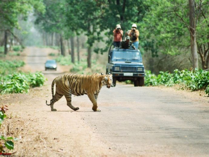 Tadoba, Tiger Census, Constant, Buffer Zone, Wildlife Institute of India (WII), Dehradun, Tadoba-Andheri Tiger Reserve (TATR)