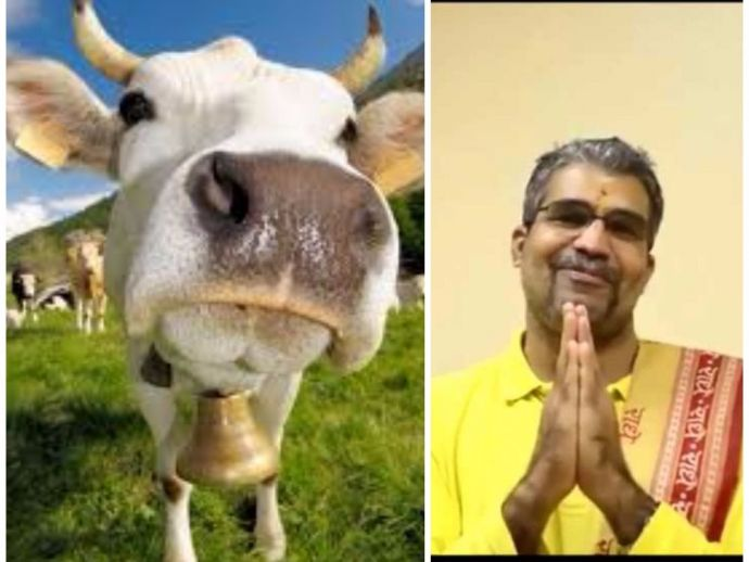 cow, cattle, godman, theory, science, biology, nuclear, horns, cowdung, myth, funny, hilarious, radioactivity, soundwaves, radiations, cancer, plutonium, swami, udit, udith, chaitanya