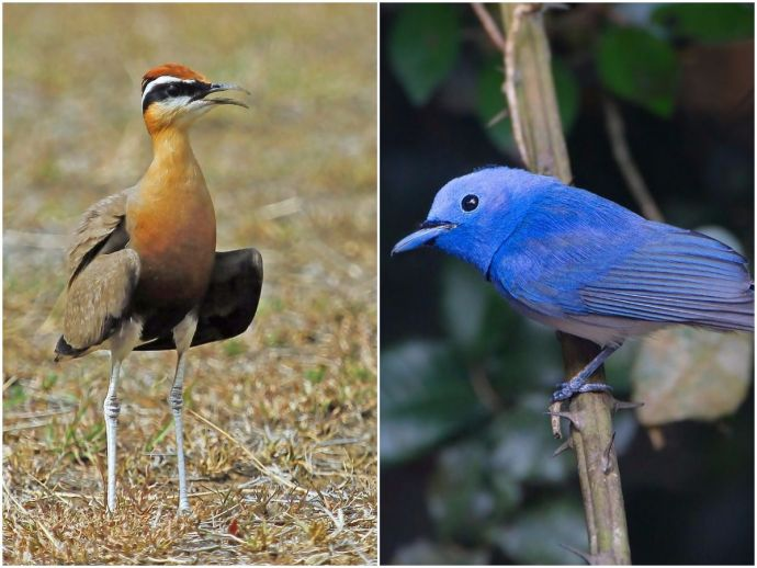 Nagpur, Bird watching, birders, nature, forests, lakes