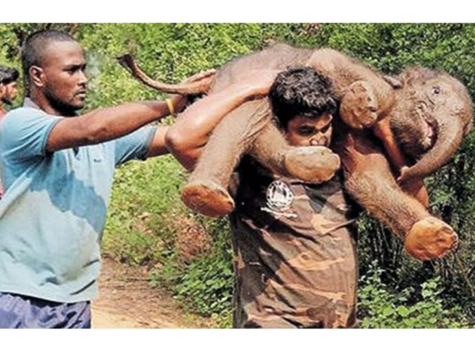Baby elephant, elephant, forest official, Nellithurai area, rescue team