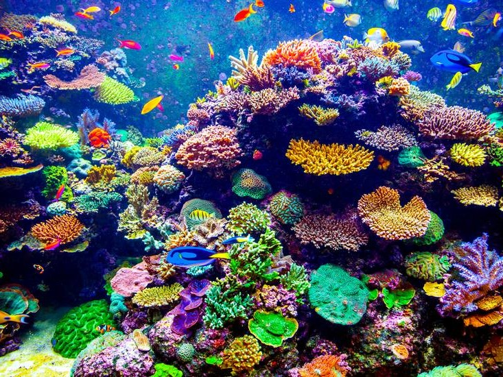 RAJA AMPAT REEFS, RAINBOW REEFS, MALDIVES-CHAGOS-LAKSHADWEEP ATOLLS, LITTLE CAYMAN REEFS, FLORIDA KEYS REEFS, PARADISE REEF