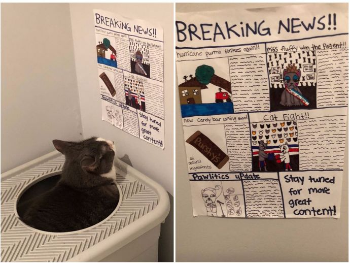 Newspaper for cat, Baba Ganoush, Jarrod Krieger, Cat, Pet cat, pampered cats
