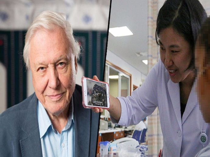 chinese, boy, stabbed, TV show, Planet Earth II, David Attenborough, voice, operation, doctor, nurse