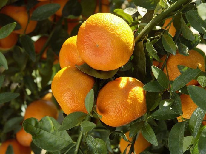 Nagpur, oranges, festival, celebration, orange city, december, world, farmers, produce, cultivate, empower, inspire, efforts