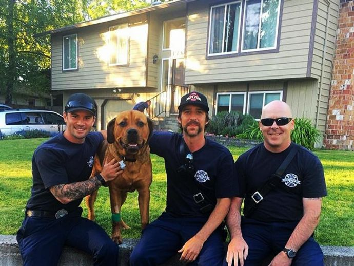 Sampson the dog, dog stuck inside fire house, house on fire, firefighters rescue dog, firefighters rescue dog from the burning house, Firefighters Rescue Dog In Washington, Dog Rescued By Fire fighter