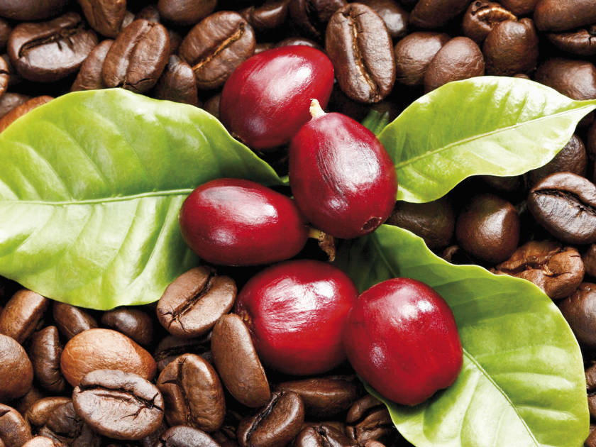 Coffee, Brewed Drink, Origins of Coffee, Coffea Plant, Brazil