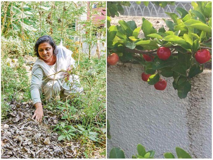 Sujata Naphade, Home grown, vegetables, organic farming, Bhosari, Brown leaf