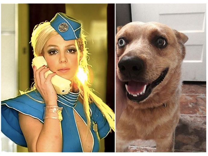 Singing Dog, Riley, Britney Spears, Toxic, Popular songs of Britney, Howling dog, Dog sings Toxic, matt