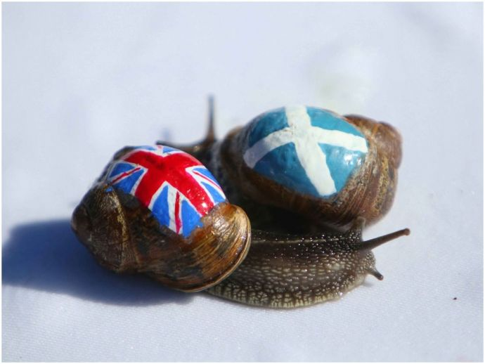 animal sports, sports, snail, snail racing, racing, animal racing, england, europe, weather, cold, snow, lethargic, hibernation, race postponed, charity race, pub, english pub