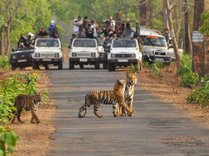 nagpur, nagpur news, Tadoba-Andhari, wildlife, October 1st, park, State wildlife parks, Maharashtra, Moharli-Pandharpaoni, tadoba