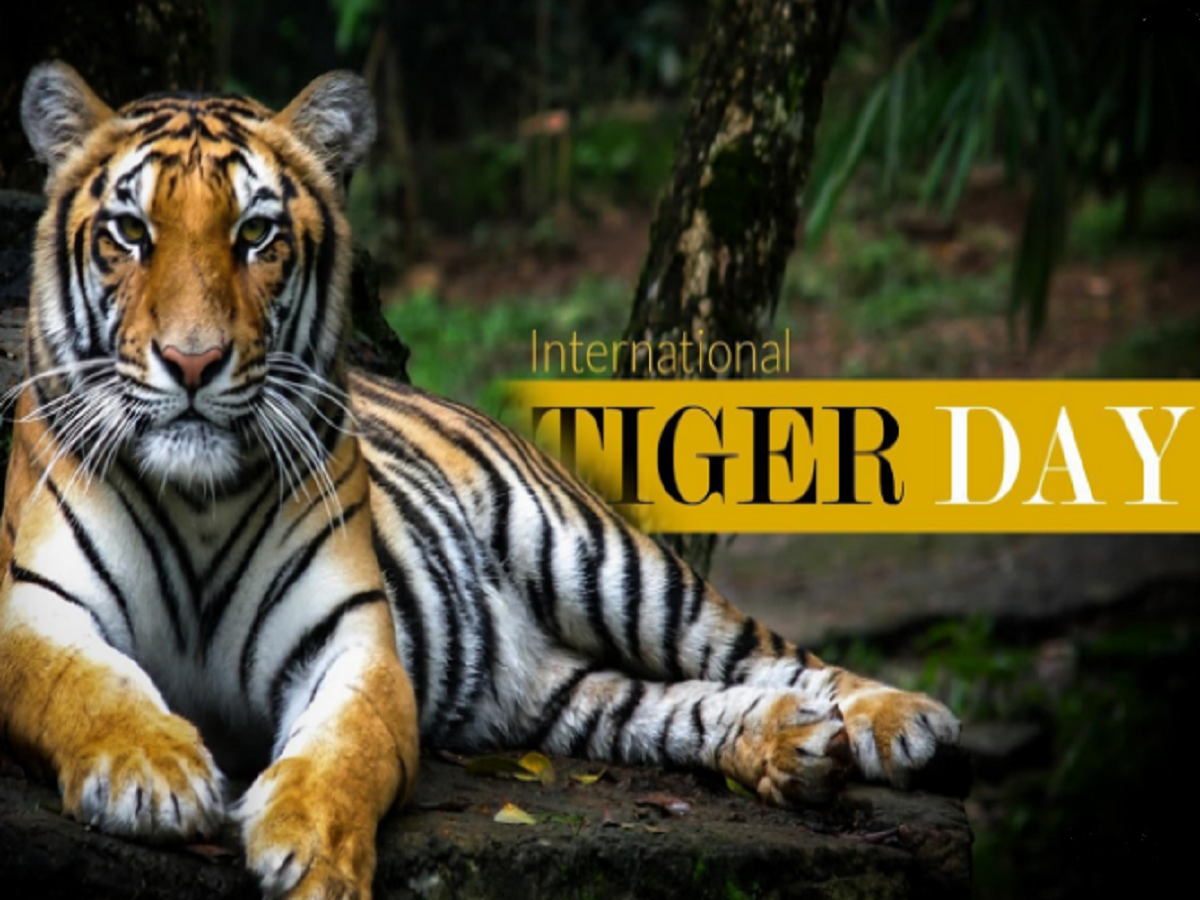 International Tiger Day, Tiger, Tiger Day, Bali, Caspian and Javan, South China tiger, Siberian Tigers, Big Cats