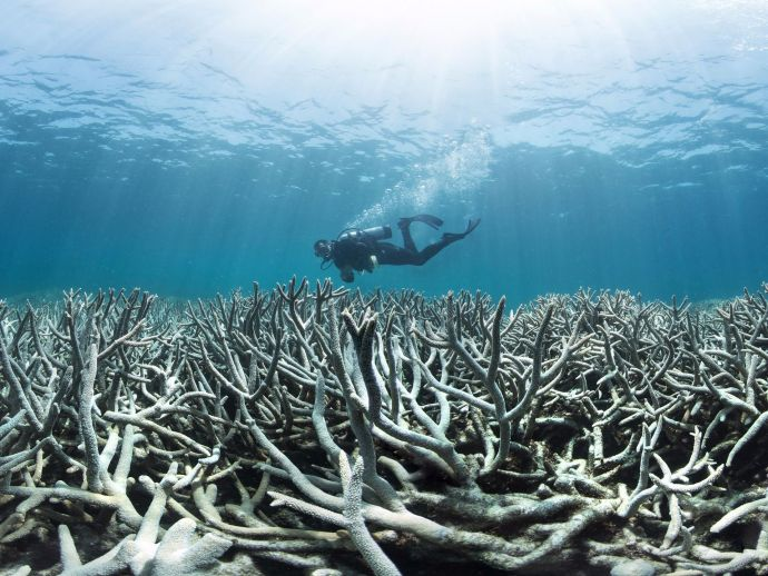Great Barrier Reef, Dying, Environment, Global Warming-Australia