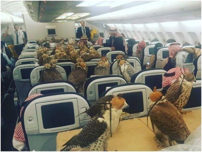 saudi arabia, qatar airways, falcons, hawks, birds of prey, airplane