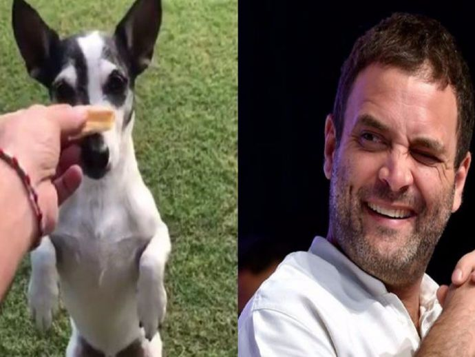 Rahul Gandhi, congress, vice president, dog, Pidi, Twitter, tweet, acoount, official