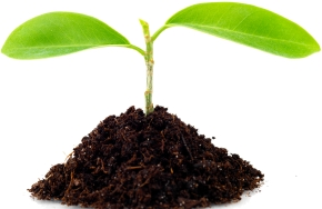 A small plant representing the growth in an addict's life after treatment