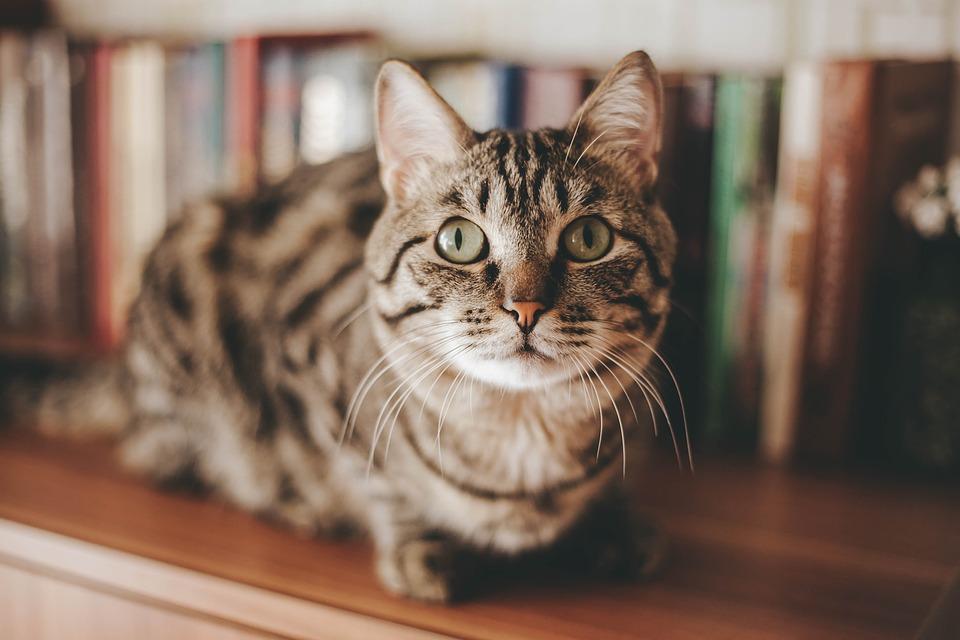 DIY! Begini Cara Membuat Kandang Kucing di Rumah