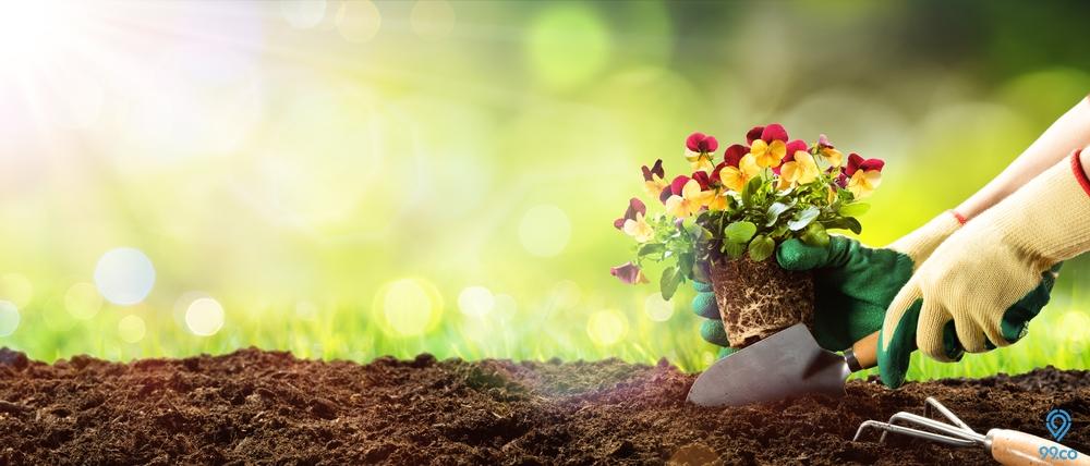 Mau Punya Hunian Cantik, Coba 7 Cara Membuat Taman Kecil di Depan Rumah Ini