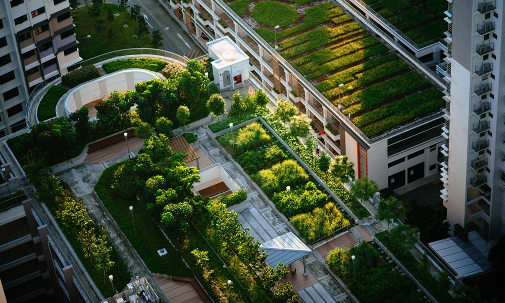 Green Roof pada Bangunan, Panduan Membangun hingga Manfaatnya