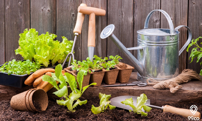 Manfaat Berkebun di Home Garden dan Inspirasi Tempat Bercocok Tanam di Rumah