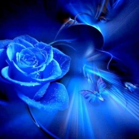 Blue Rose - everlasting love