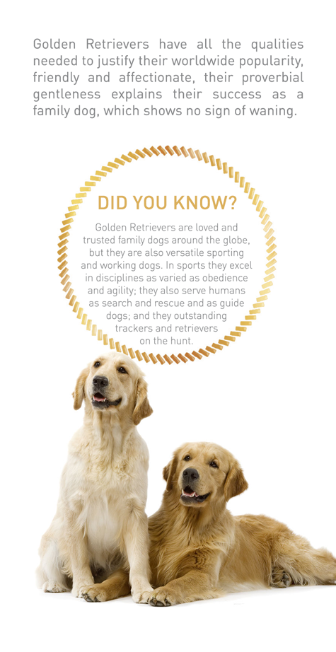 the versatility of the golden retriever breed of dogs