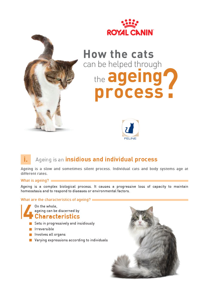 Cat-Senior Consult - Royal Canin Malaysia - Royal Canin