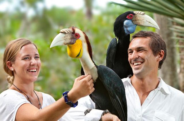 巴厘岛飞禽公园