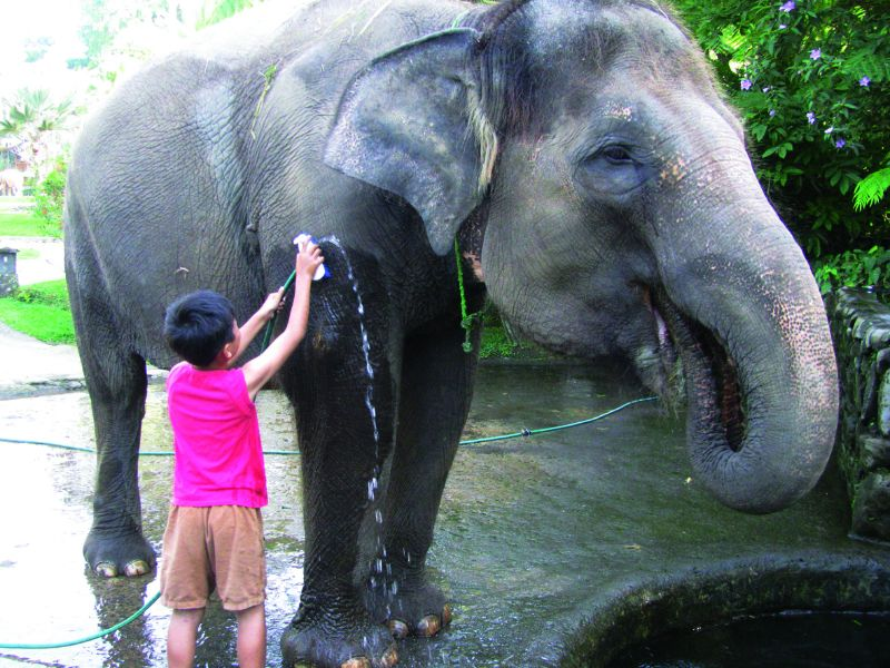 Washing Elephant