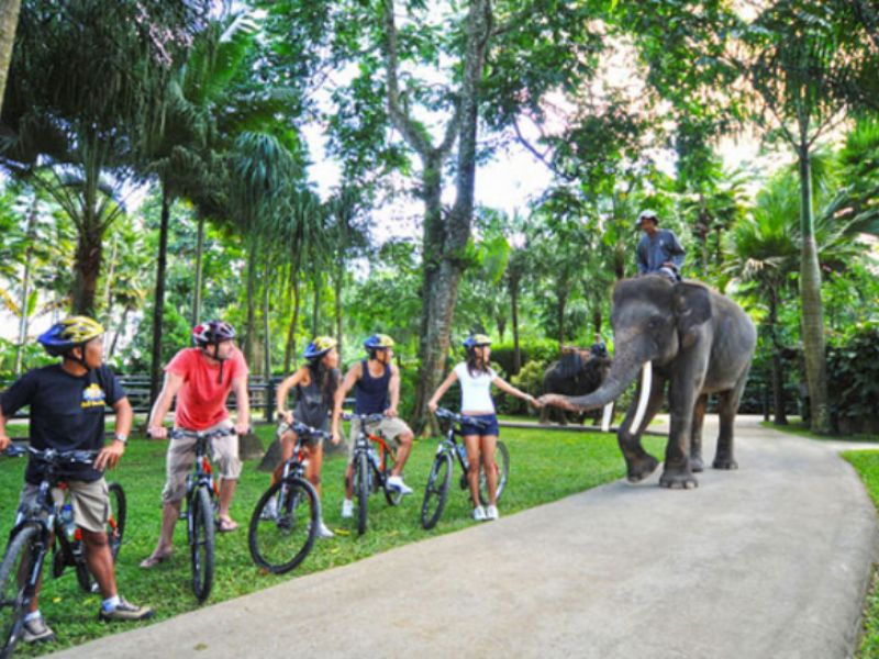Cycling with Elephant