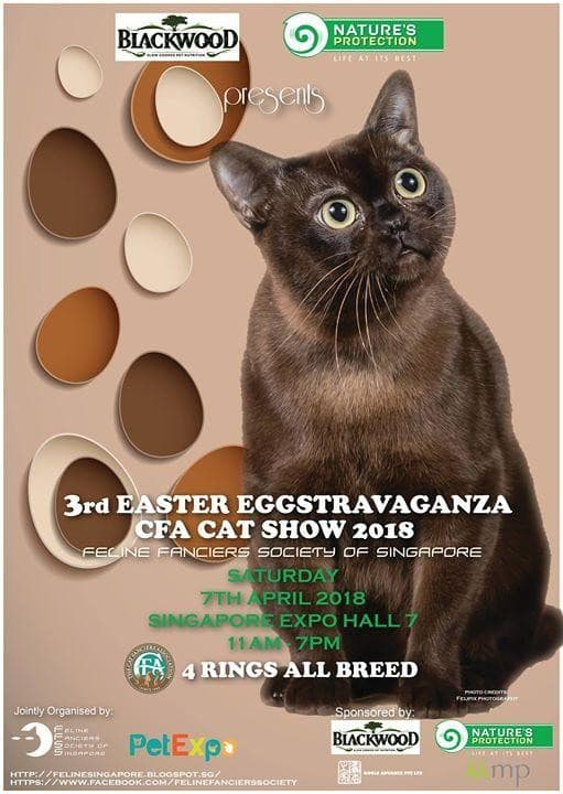 Ffss easter eggstravaganza cat show 2018 loopme singapore negle Choice Image