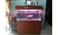 13inch Tanga Red Arowana with FULL SET of 4x1.5x2 cabinet tank