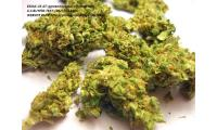 High Grade,Medium Grade & Low Grade Medical Marijuana for sale