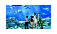 SEA Aquarium cheap ticket discount Sentosa Universal Studios Adventure cove Cable car Zoo