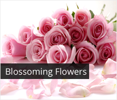 Fresh Flowers Delivery in Sector 15, Faridabad