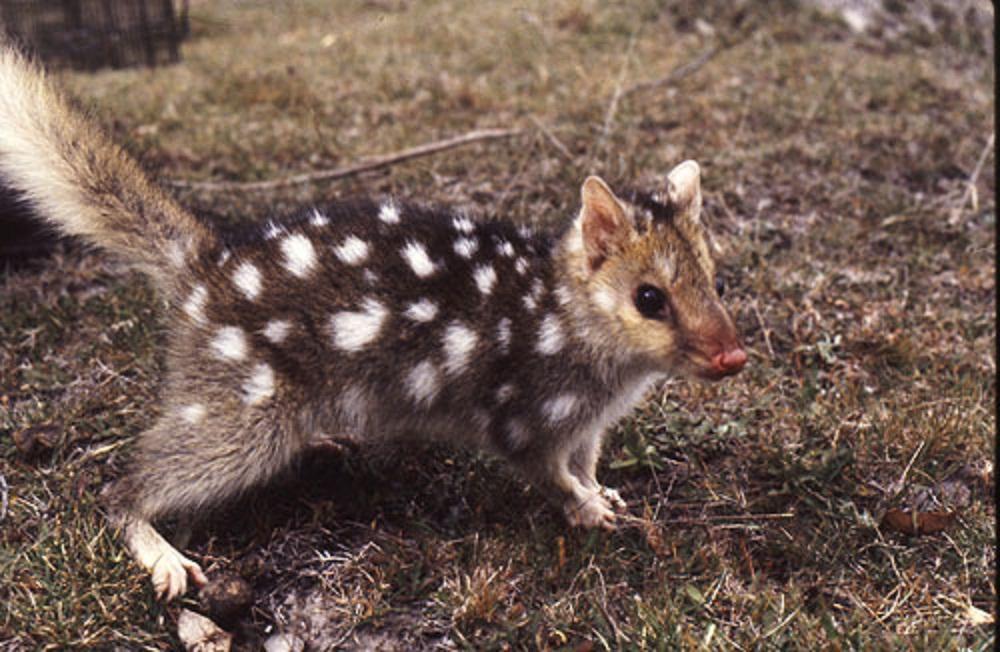 26 Binatang Paling Imut Di Dunia