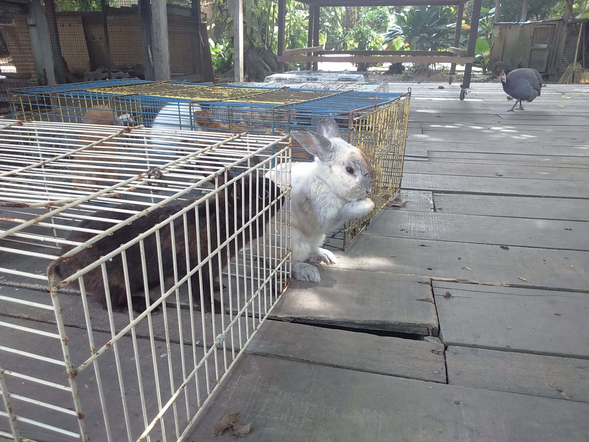 The Animal Resort 4