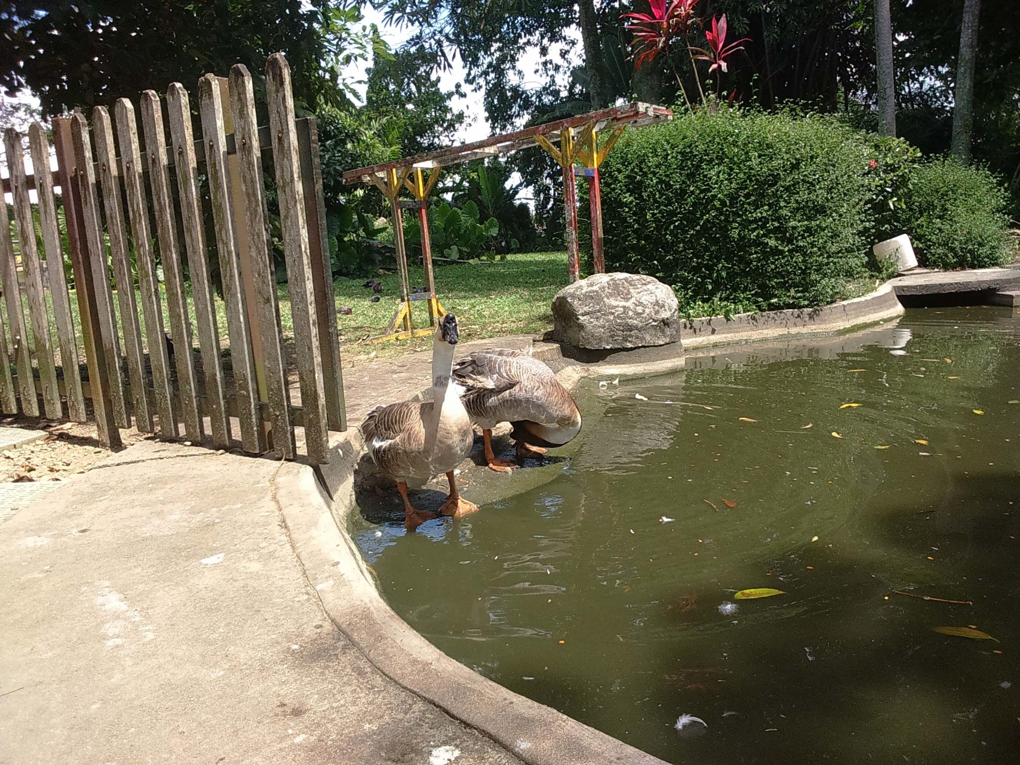 The Animal Resort 5