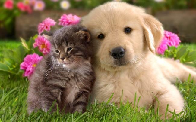 7 ý tưởng kinh doanh dành cho những người yêu động vật