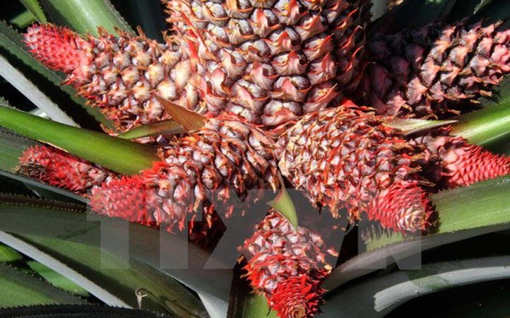 Top những loại trái cây Tết được săn lùng nhiều nhất