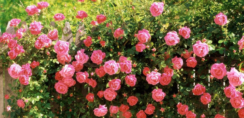 Những bí kíp xây dựng thương hiệu cho cửa hàng hoa cực hiệu quả