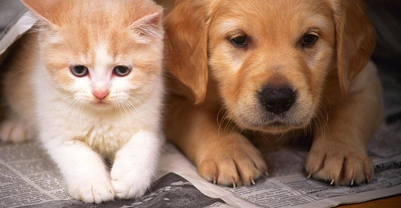 Kỹ thuật nuôi chó cảnh, 4 kinh nghiệm kinh doanh thú cưng cần có