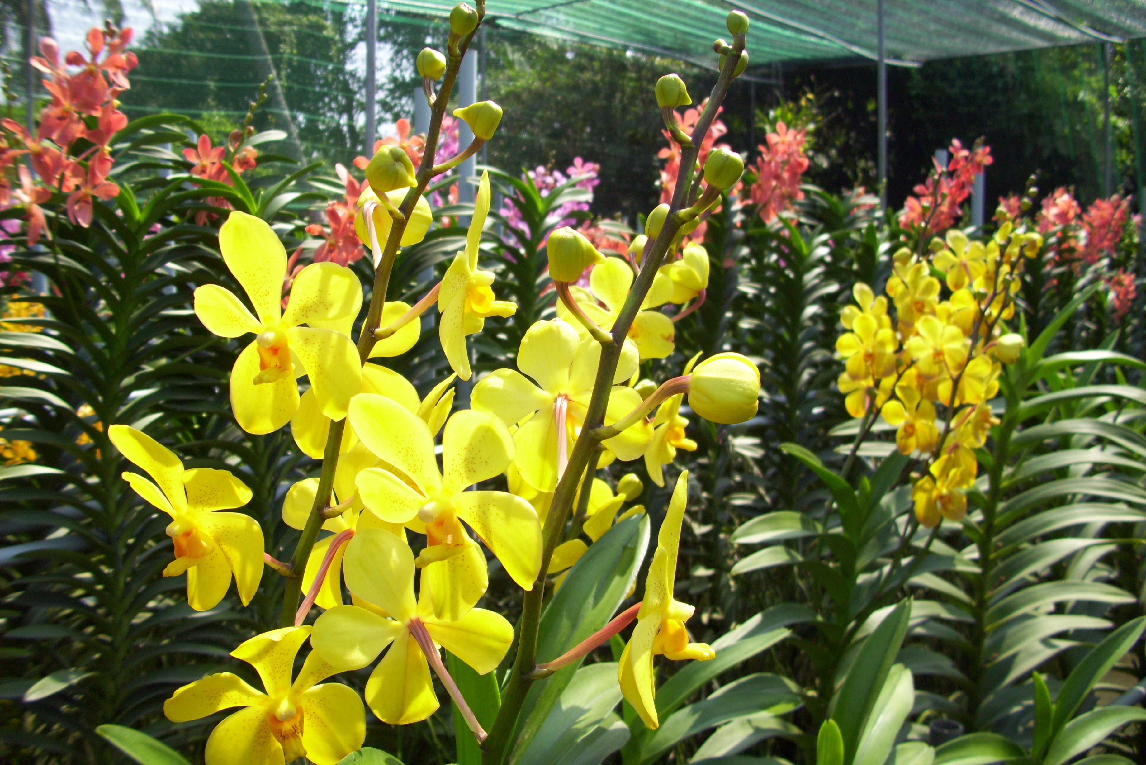 Mách nước các nguồn hàng nhập hoa tươi phong phú và giá rẻ