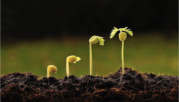 Tool seeding – con dao hai lưỡi và cách seeding hiệu quả khi chạy quảng cáo Facebook